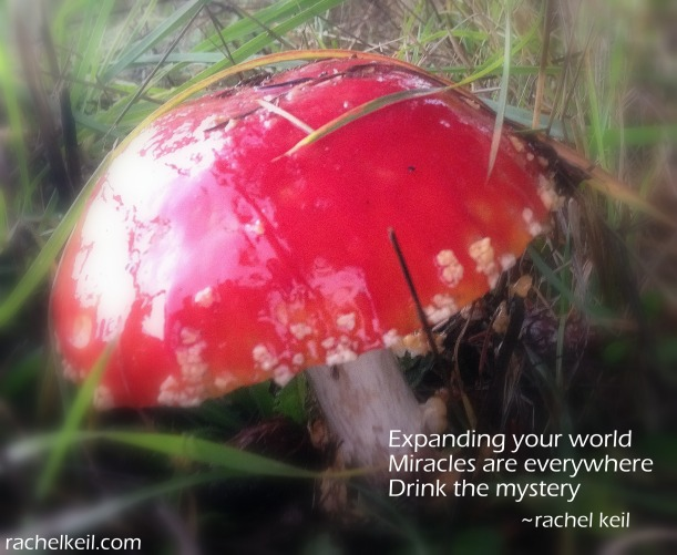 Drink the Mystery-Haiku Blog