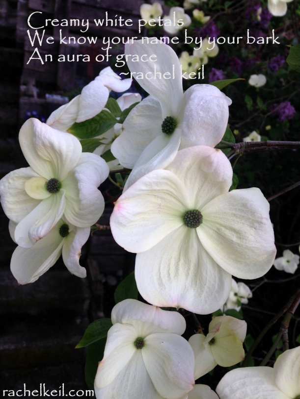 Aura of Grace-Blog Haiku