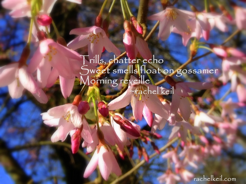 Morning Reveille-Blog Haiku