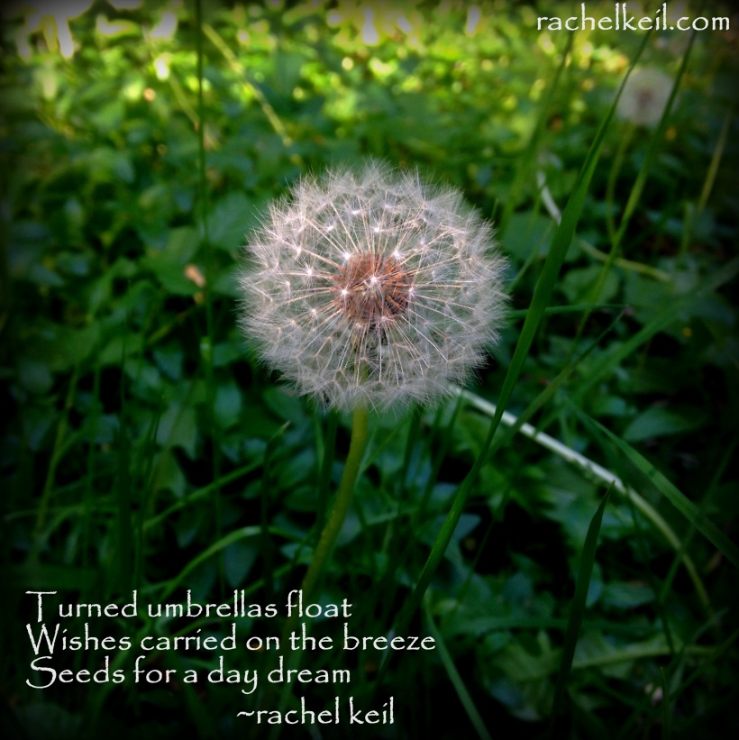 Make a wish-Blog Haiku
